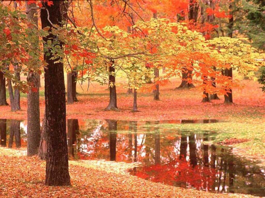 automne11.jpg