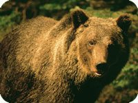 beargeneric.jpg